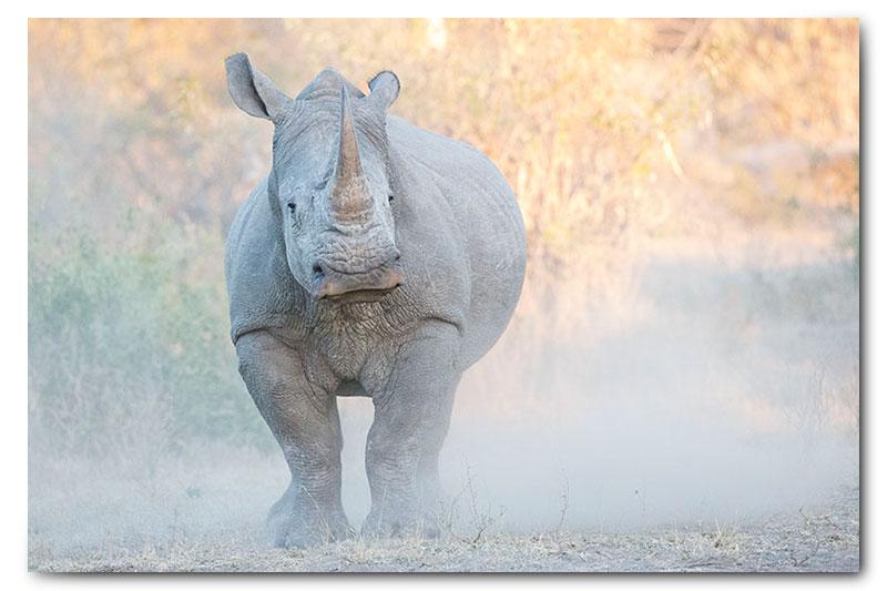 Rhino in klaserie