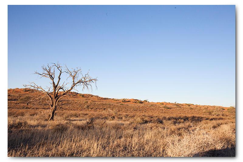 kgalagadi landscape tree grass