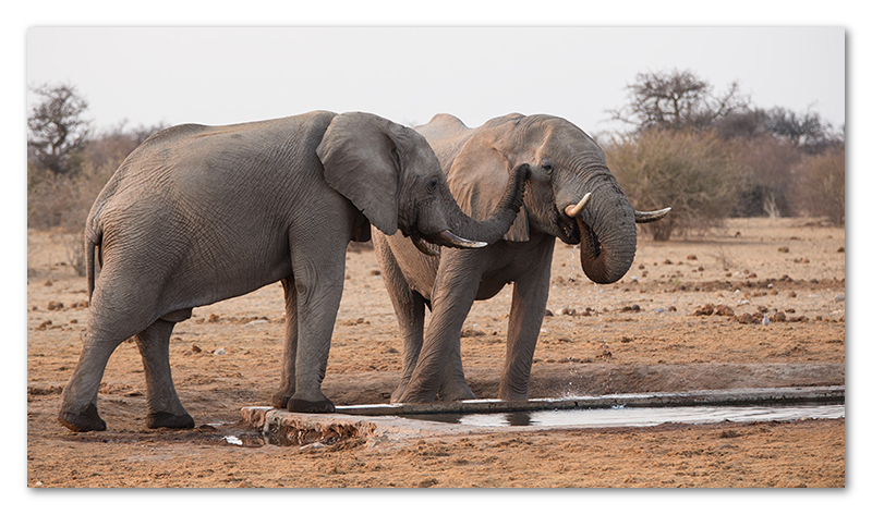 Peter Dawson Photography - etosha elephants namibia