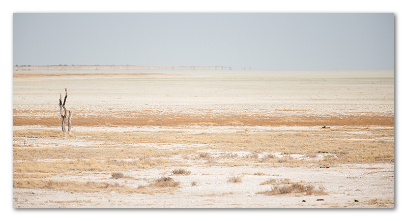 Peter Dawson Photography - etosha vista namibia desert