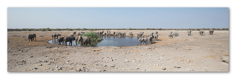 Peter Dawson Photography - Etosha desert elephants waterhole