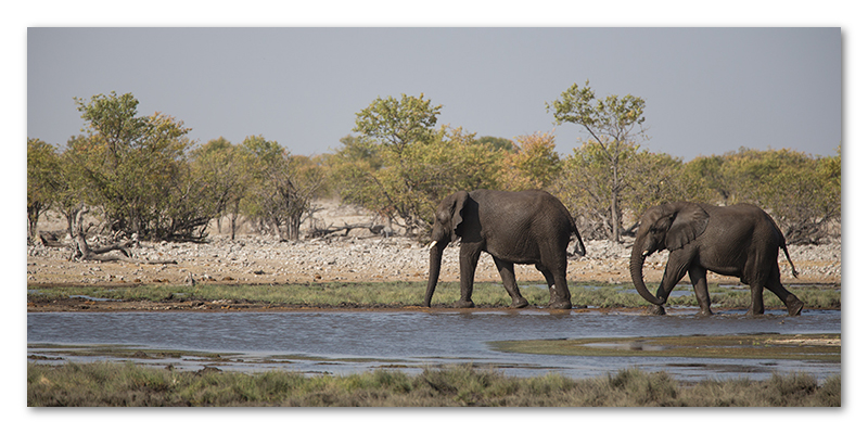 Peter Dawson Photography - etosha desert elephants
