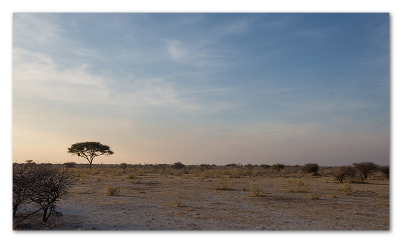 Peter Dawson Photography - etosha vista