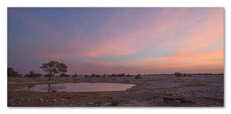 Peter Dawson Photography - Etosha black rhino waterhole sunset