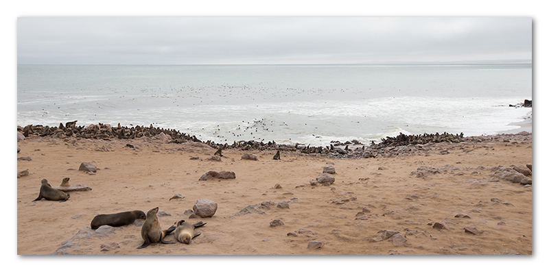 Peter Dawson Photography - Cape cross seal colony
