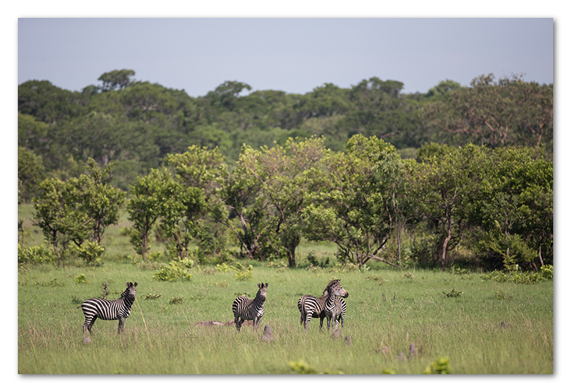 peter dawson kafue national park wildlife (17)